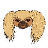 Cute face Pekingese dog, isolated on white background. Vector cartoon greeting card with animal face, hand drawing sketch style funny muzzle dog.r Stock Image