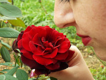 Cute face woman enjoying the smell first rose. Picture with beautiful woman enjoying the smell first rose in nature Stock Images