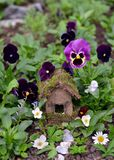 Cute fairy house with garden viola flowers Stock Image