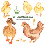 Cute farm animals duck, duckling, chik, chicken watercolor