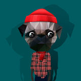 Cute fashion Hipster Animal Royalty Free Stock Photography