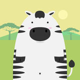 Cute fat big zebra horse Royalty Free Stock Image