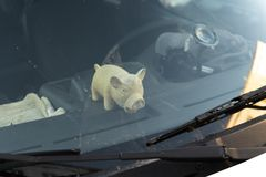 Cute fat pig toy behind a car`s windshield window. Sunny reflection stock photo