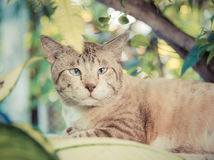 Cute fat snowy cat is looking and focusing something in the gree Stock Photo