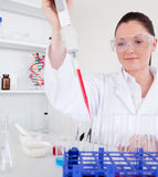 Cute female biologist. Holding a manual pipette with sample from test tubes in a lab Royalty Free Stock Photos