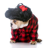 cute female puppy Stock Photography