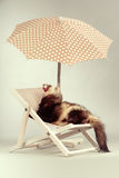 Cute ferret portrait on beach chair in studio. Ferret portrait on beach chair in studio Royalty Free Stock Photos