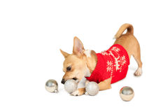 Cute festive dog with baubles Royalty Free Stock Image