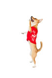 Cute festive dog with paws up Royalty Free Stock Photography