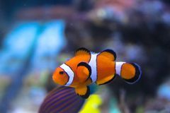 Cute fish in the aquarium stock images