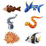 Cute fish collection set  on white background Stock Images
