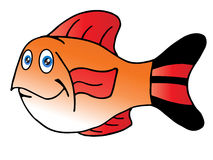 The cute fish red fin Stock Photos