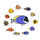 Cute fish vector illustration icons set. Tropical fish, sea fish,. Aquarium fish Royalty Free Stock Photography