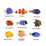 Cute fish vector illustration icons set. Tropical fish, sea fish, aquarium fish . Cute fish vector illustration icons set. Tropical fish, sea fish, aquarium Royalty Free Stock Photos
