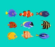 Cute fish vector illustration icons set. Tropical fish, sea fish, aquarium fish. Cute fish vector illustration icons set. Tropical fish, sea fish, aquarium fish Royalty Free Stock Photo
