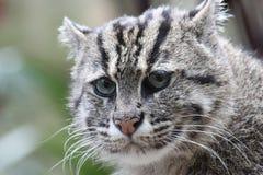 Cute fishing cat Royalty Free Stock Image