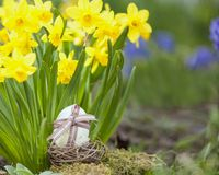 Cute floral decoration with Easter egg Stock Photos