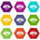Cute flower icons set 9 vector. Cute flower icons 9 set coloful isolated on white for web Royalty Free Stock Photography