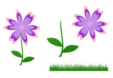 Cute flower, pink-purple-violet. Illustration of cute flower, pink-purple-violet flower and green leaves standing and green grass isolated on white background Stock Photos