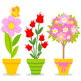 Cute flower pots Royalty Free Stock Images