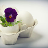 Cute flowers in egg shells for Easter Stock Photography