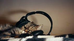 Cute fluffy beautiful tabby cat listening to music in big headphones, enjoying life, resting stock video