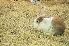 Fluffy bunny in the farm Stock Photography