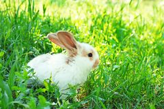 Cute fluffy bunny among green grass. Outdoors Stock Photo
