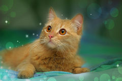 Cute fluffy cat. On a blue green background stock photos