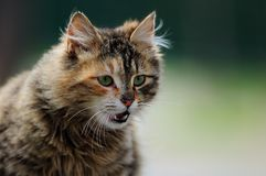 Cute fluffy cat. With a green background Royalty Free Stock Photo