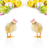Cute fluffy chicks and Easter Eggs Royalty Free Stock Photography