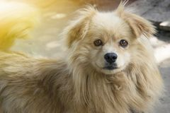 Cute fluffy dog smiles. Great photo on a sunny day. Symbol of 2018. Nice royalty free stock image