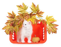 Cute fluffy kitten Royalty Free Stock Images