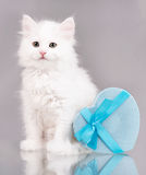Cute fluffy kitten Royalty Free Stock Photos