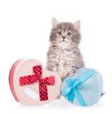 Cute fluffy kitten Royalty Free Stock Image