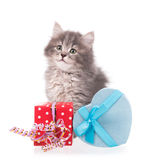 Cute fluffy kitten. With gift box  over white background Royalty Free Stock Images