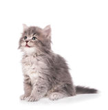 Cute fluffy kitten. Isolated on a white background Royalty Free Stock Photo