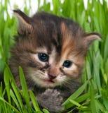 Cute fluffy kitten Stock Photos