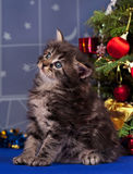 Cute fluffy kitten. Over Christmas spruce background Stock Photos