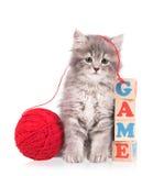 Cute fluffy kitten Stock Photography