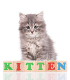 Cute fluffy kitten Royalty Free Stock Photos