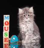 Cute fluffy kitten Royalty Free Stock Photo
