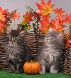 Cute fluffy kittens Stock Image