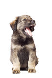 Cute fluffy puppy Royalty Free Stock Images