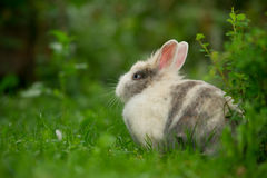 Cute Fluffy Rabbit Outdoors Stock Image