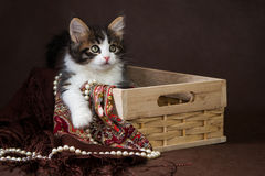 Cute fluffy siberian kitten in a basket on brown background. portrait Royalty Free Stock Image