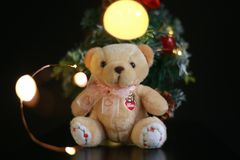 Cute fluffy teddy bear with Mini Christmas tree decoration  on dark black background. Year end, Christmas and holiday conceptual image Royalty Free Stock Image