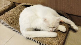 Cute Fluffy White Cat Sleeping on The Wooden Box. Cute Fluffy White Cat Sleeping on The Box Stock Photos