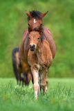 Cute foal and mare. Close up portrait outdoor Stock Photo