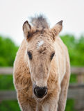 Cute foal Stock Photo